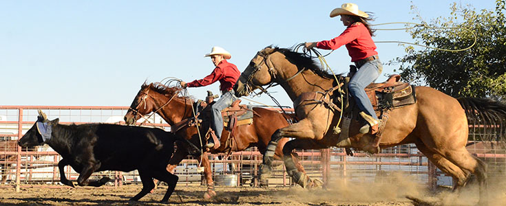 Fresno State Bulldoggers rodeo action picture